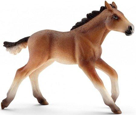 Schleich (SLH13807): Mustang źrebię